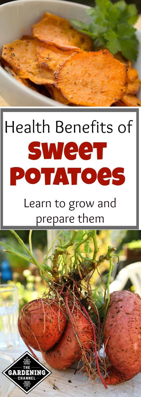 Health Benefits Of Sweet Potatoes Gardening Channel