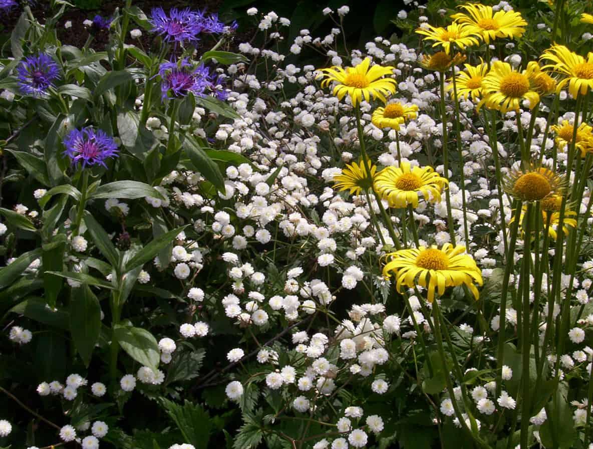 Low Maintenance Garden Landscaping