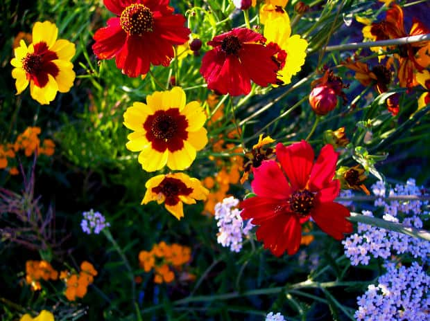 What Do Different Flower Names Mean Gardening Channel