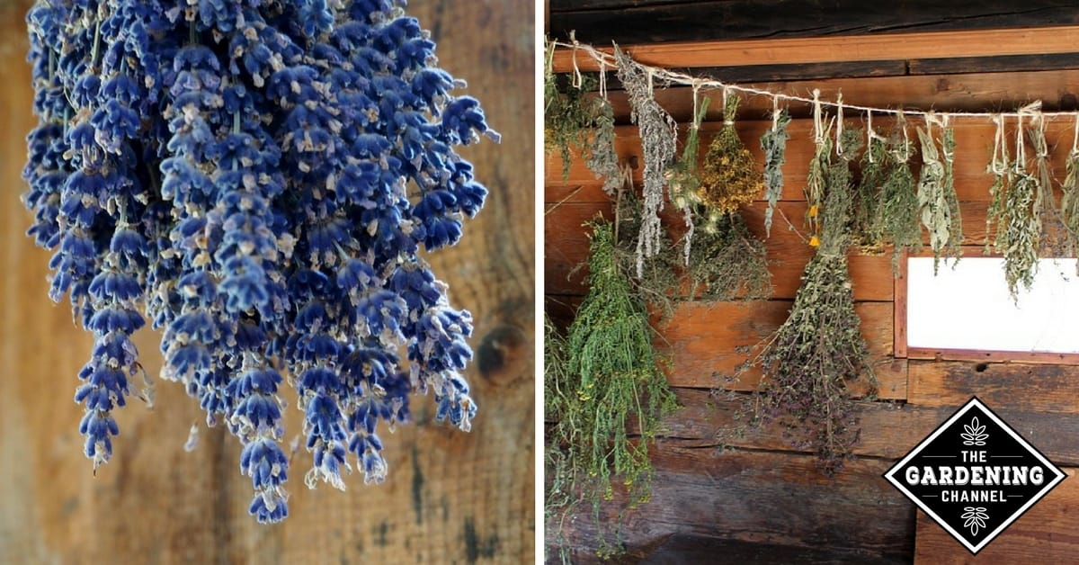 How To Dry Herbs From The Garden Gardening Channel