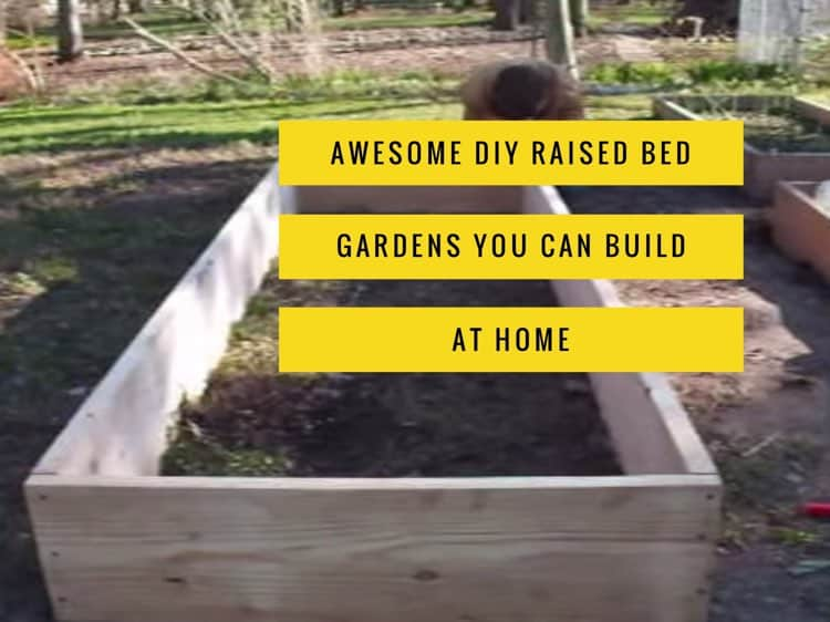 Growing Tomatoes In Raised Bed