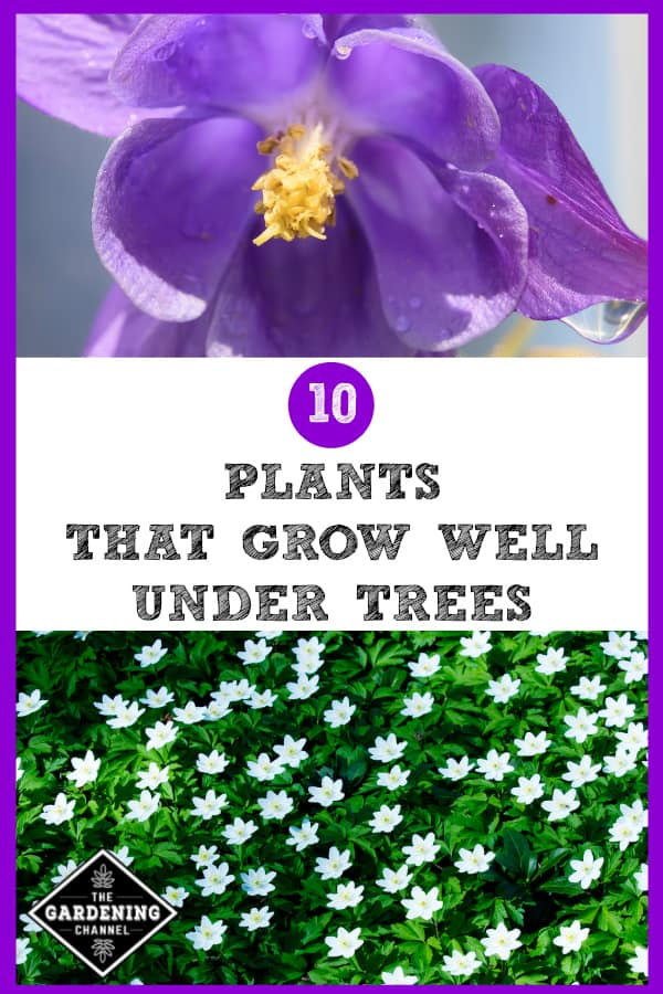 10 Plants That Grow Well Under Trees Gardening Channel