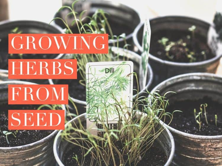 An Herb Garden Or Culinary Is One Of The Most Por Types Indoor Outdoor Gardening Adventures That Combines With Cooking