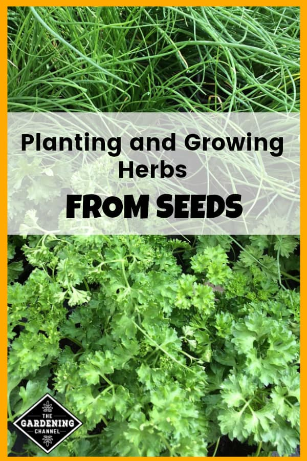 Want To Learn More About Growing Herbs From Seeds