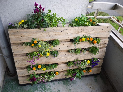 10 diy garden ideas for using an old pallet gardening for Terrazze arredate con piante