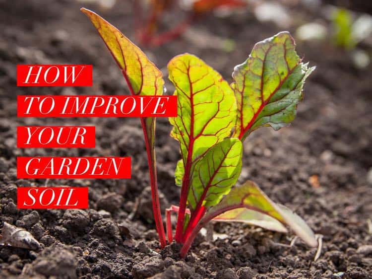 How to Improve Your Garden Soil - Gardening Channel