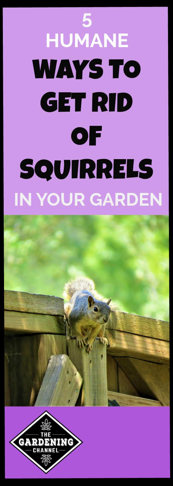 moth away how keep balls garden repel yup gardening squirrels to from with