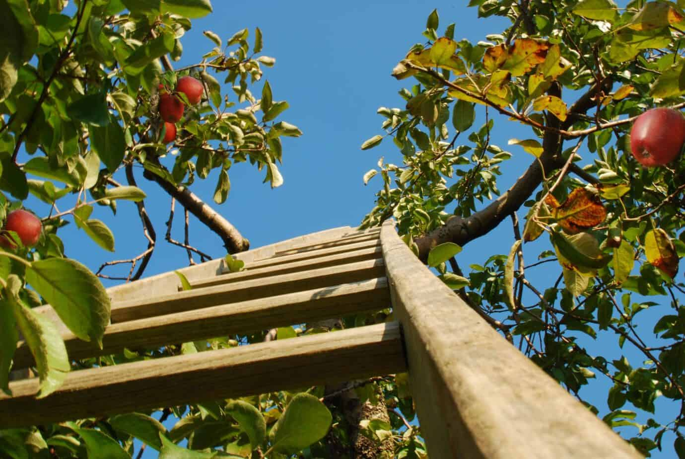 Growing A Home Orchard Gardening Channel