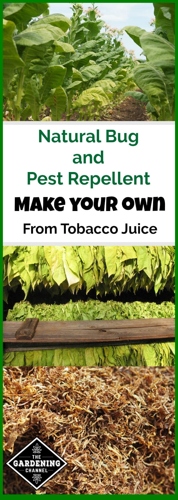 How To Make Natural Tobacco Juice Bug And Pest Repellent