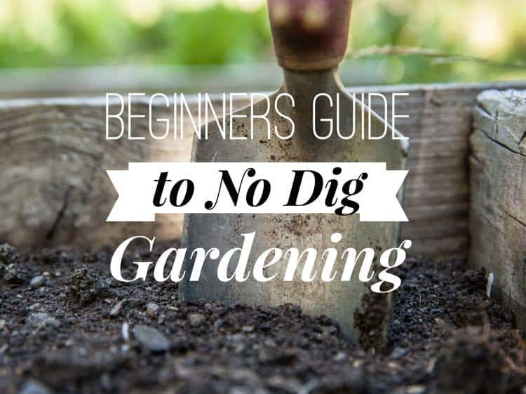 No Dig Vegetable Gardening For Beginners Gardening Channel