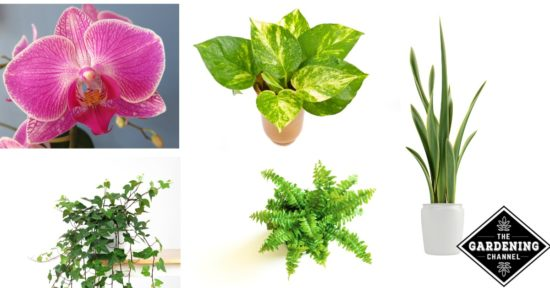 List Of Houseplants For Low Light Gardening Channel