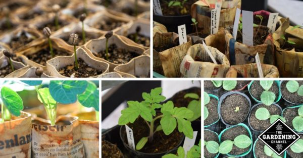 What You Need To Know About Seed Starting Containers Gardening